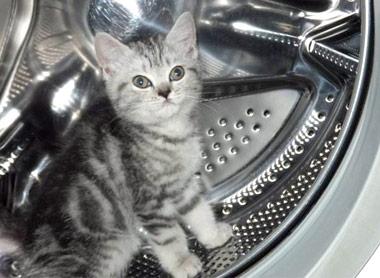 波轮OR滚筒 扒开洗衣机内幕带你看明白